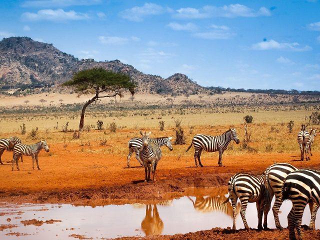 Vacanta in Kenya, 546 euro/p (zbor+cazare hotel 4* cu md)